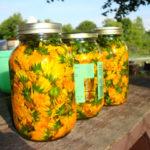 calendula flowers in jars