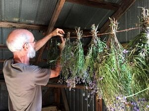photo of person hanging bunches of herbs to dry